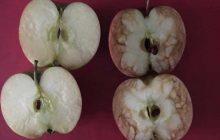 Le harcèlement scolaire illustré à des enfants grâce à deux pommes