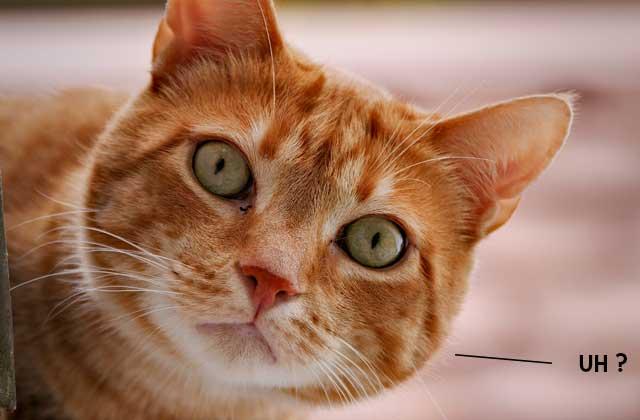 Curious Cat, le nouveau «ask.fm» version kawaii