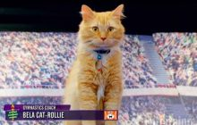 Les Kitten Summer Games, version féline (et adorable) des Jeux Olympiques