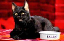 Josée l'Obsédée et sa chatte maudite