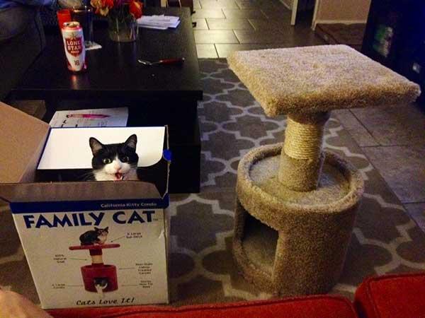 asshole-cat