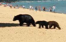 Maman ours et ses oursons à la plage, parce qu'il fait chaud pour tout le monde en été