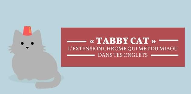 Les chats ont envahi la rédac grâce à «Tabby Cat» !