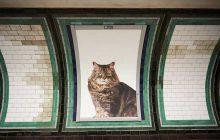 Des chats PARTOUT dans une station de métro londonienne