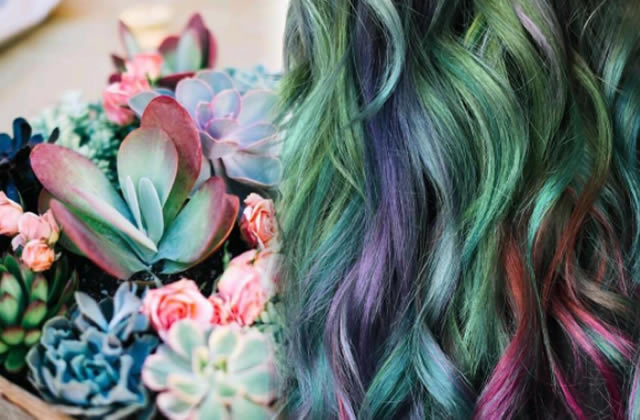 Les cheveux colorés «façon succulente», la jolie idée inspirée des jardins