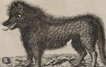 Connaissez-vous tous les monstres de la mythologie française?
