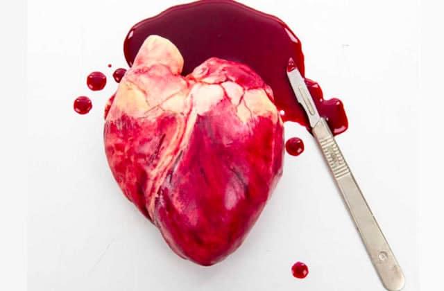 Le cœur humain et les fossiles en chocolat ornent un insolite cabinet de curiosité