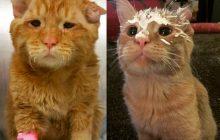 Le chat le plus tristoune du Web a été adopté et c'est une belle histoire!