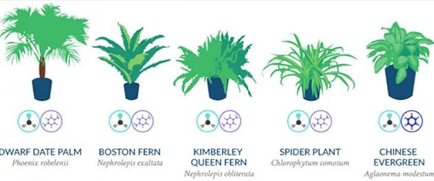 infographie-plantes-depolluantes