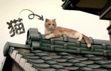 Neko Atsume (le film) a sa bande-annonce pleine de chats beaucoup trop mignons