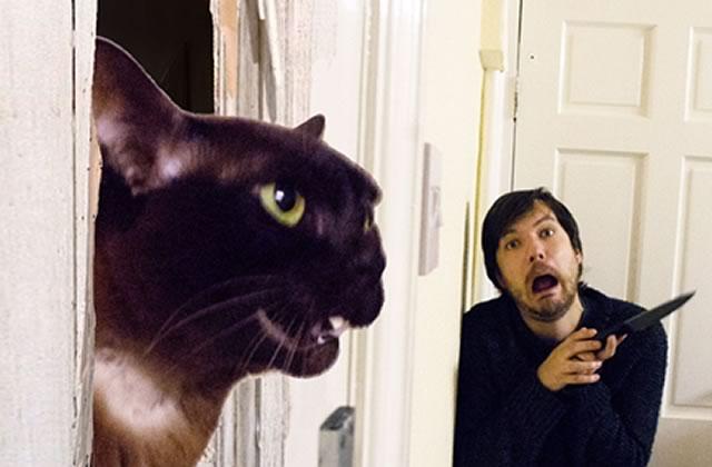 Des scènes de films recréées avec des chats dans des clichés à miauler de rire