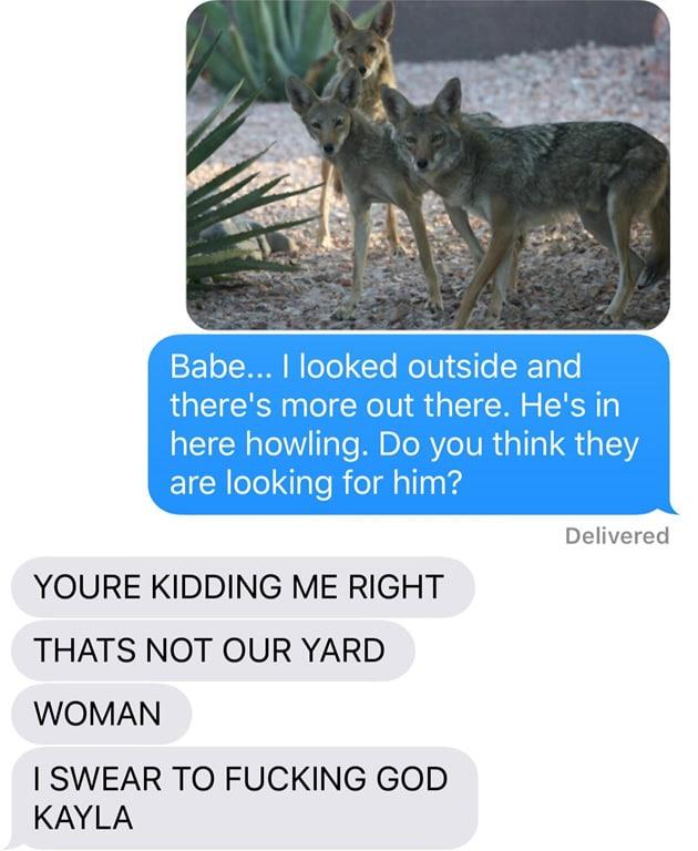 chien-coyote-wtf-12