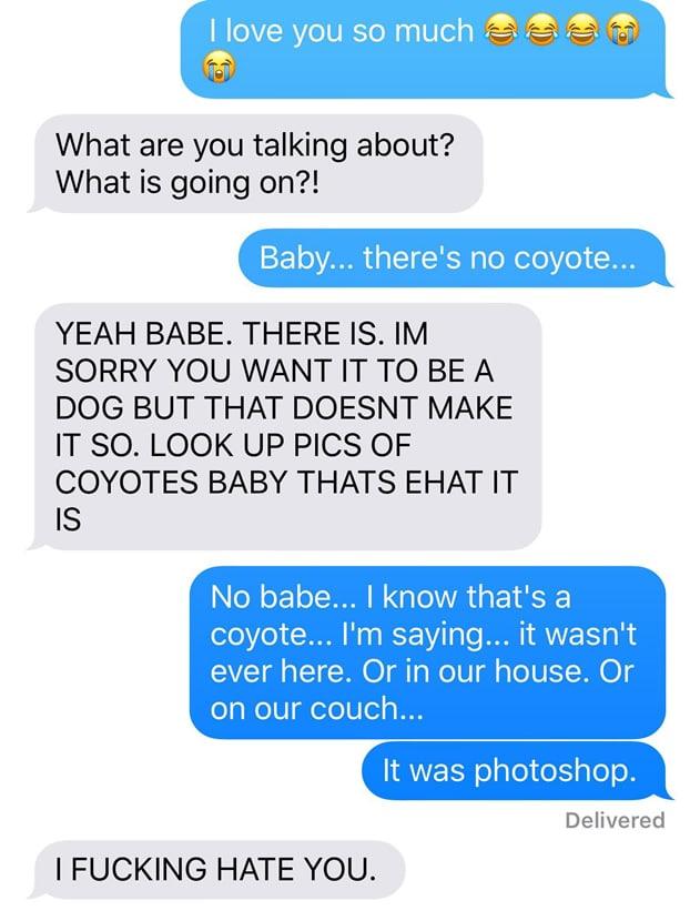 chien-coyote-wtf-13