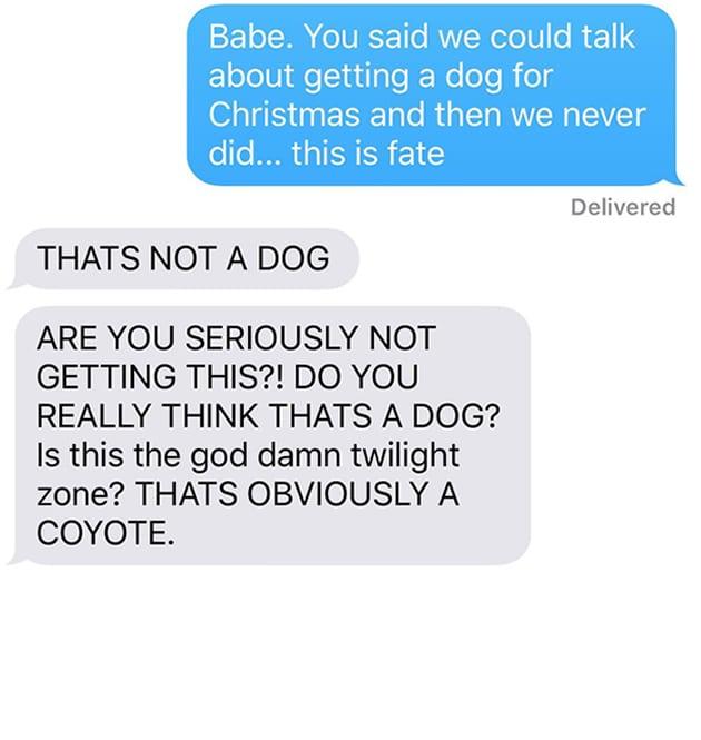 chien-coyote-wtf-4