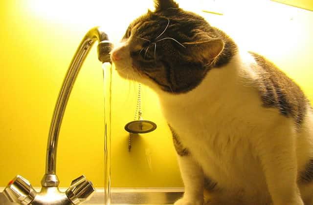 Je suis potomane: je dois tout le temps boire de l'eau