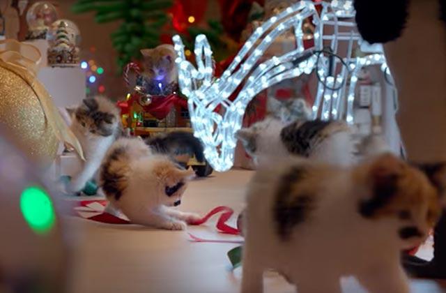 Des chats, une salle pleine de décorations de Noël… La suite ne va pas vous étonner