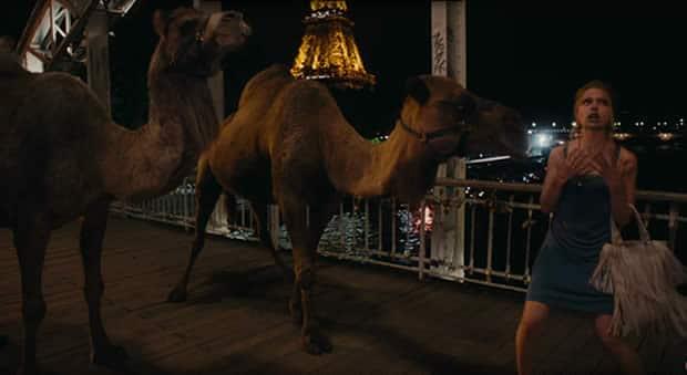 un-jour-mon-prince-chameaux