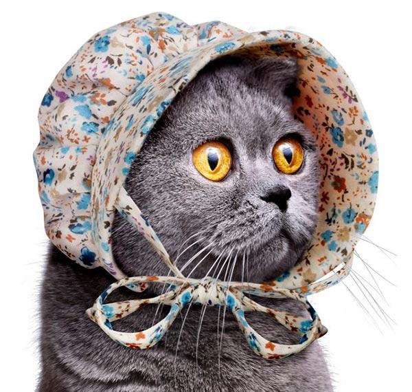 bonnet-chat-2