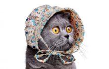 Le bonnet de laitière pour chat, parce qu'Internet est merveilleux
