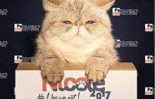 En 2017, votez Nicole, la chatte qui voudrait être présidente de la République
