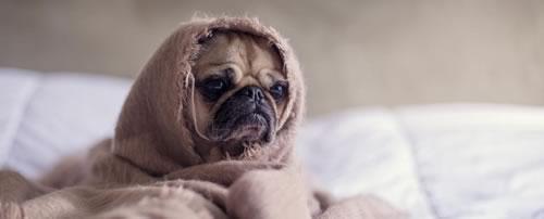 chien-triste-lit