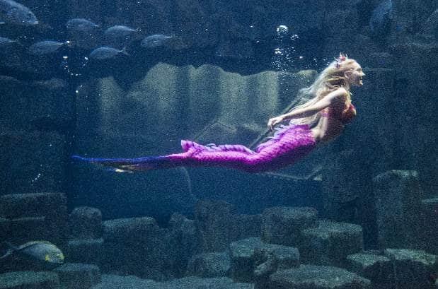 claire-aquarium-roberto-d-alessandro