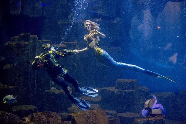 claire-sirene-aquarium-roberto-d-alessandro