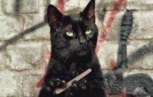Vendredi 13, chat noir… d'où viennent les superstitions?