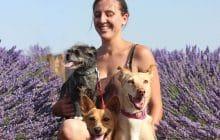 J'ai adopté trois chiens rescapés d'Espagne, victimes de mauvais traitements