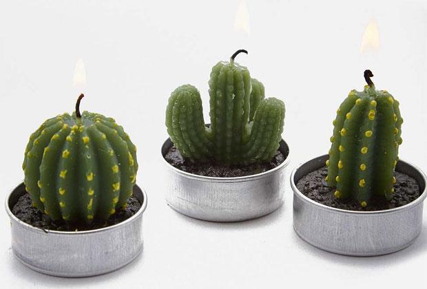 cactus11