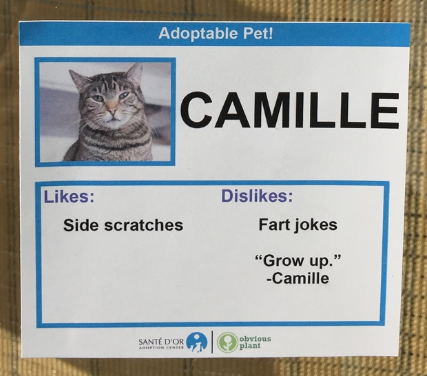 chat-camille