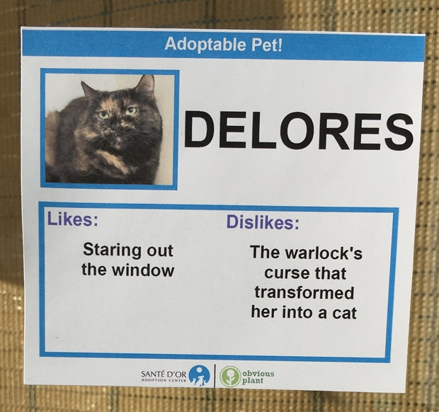 chat-delores