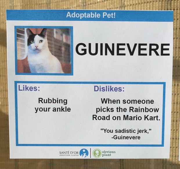 chat-guinevere