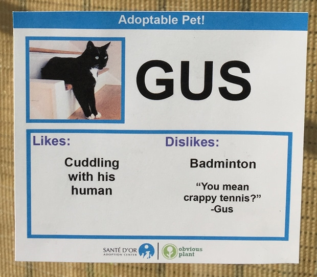 chat-gus