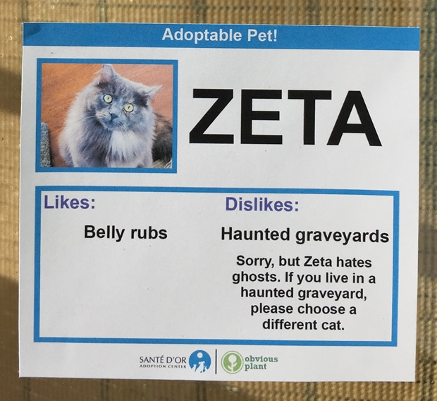 chat-zeta