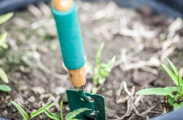 Créer et s'occuper d'un petit potager 100% bio