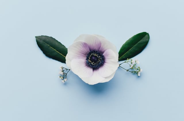 Sélection de parfums qui fleurent bon le printemps