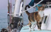 L'adorable histoire d'Amelia le Tropicat, un chat devenu marin
