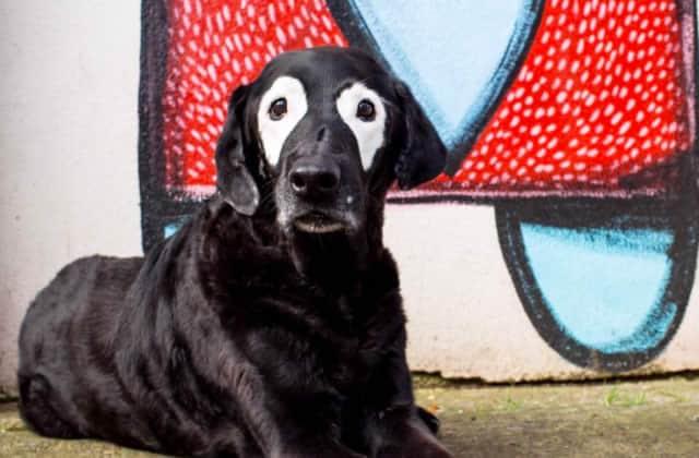 Le chien atteint de vitiligo qui allait à la rencontre des enfants partageant la même maladie est décédé