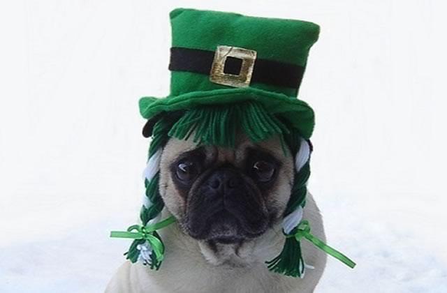 Guide de survie pour une Saint Patrick réussie!