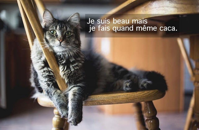 litiere chat ou la mettre