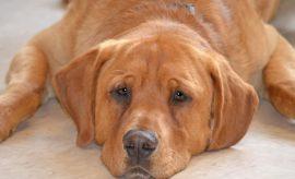 L'histoire d'Eastwood, le tout dernier chien d'un refuge aux États-Unis