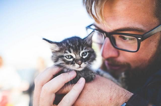 Passer sa journée à câliner des chats, le job de rêve