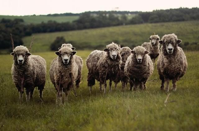 Sommes-nous une génération de moutons? Enquête sur les valeurs de la jeunesse en 2017
