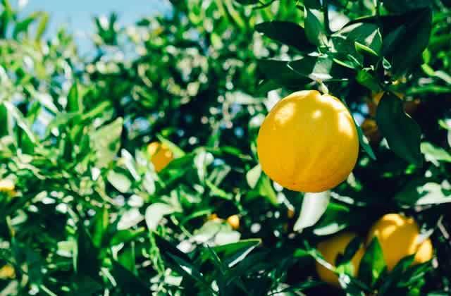 Classement des fruits à récolter, du plus chiant au plus chouette