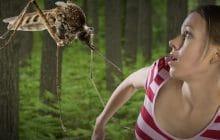 Pourquoi les piqûres de moustiques créent des réactions impressionnantes sur certaines personnes