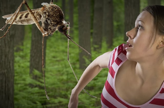 Pourquoi ne sommes-nous pas tous égaux face aux piqûres de moustiques?