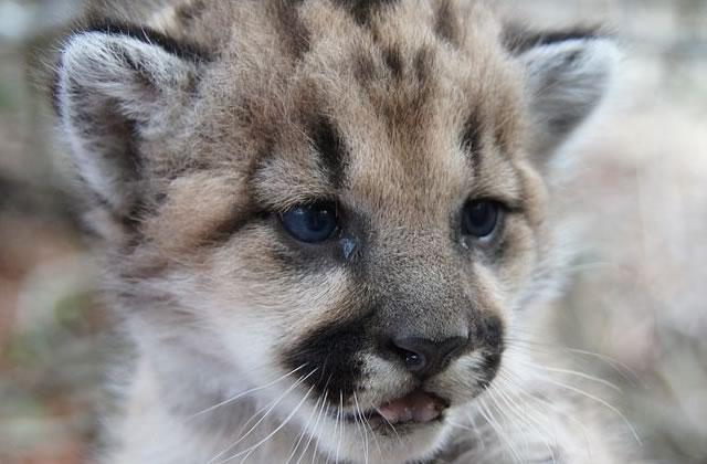 Des chercheurs alertent sur la sixièmeextinction de masse des animaux