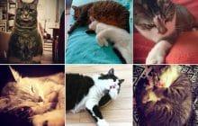 On a fait un concours de chats sur Instagram, et vous avez été formidables!