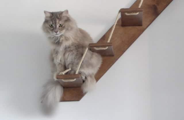 Sélection de cadeaux beaucoup trop mignons pour chats